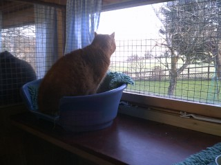 Ginger cat looking out at view