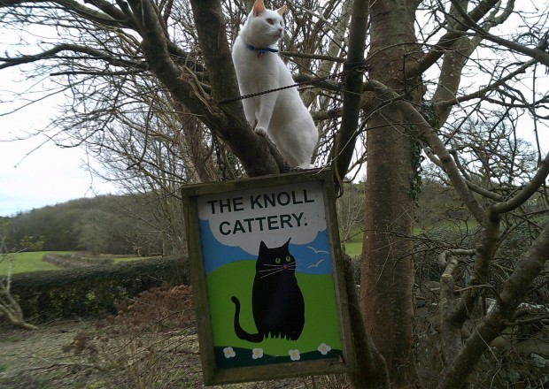 A cat sitting on a sign saying 'The Knoll Cattery'